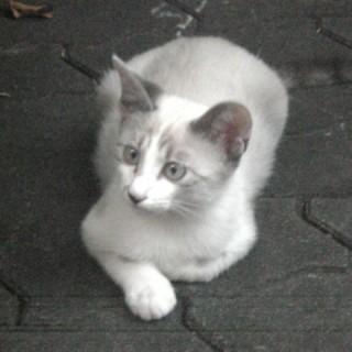 2008-08-07cat.jpg