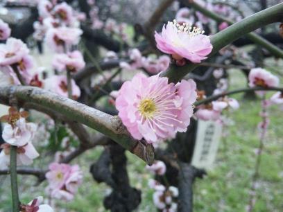 2009-03-10-3.jpg