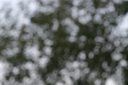 2009-07-17-bokeh04.jpg